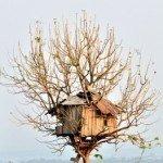 Ein Baumhaus bauen mit einem deutlichen Bauplan