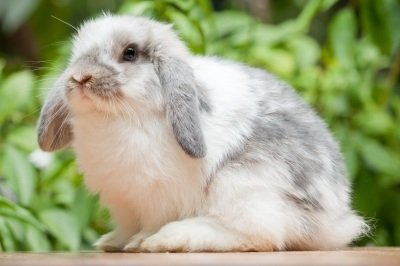 Selber einen Kaninchenstall bauen? Lese hier wie du das machen kannst!