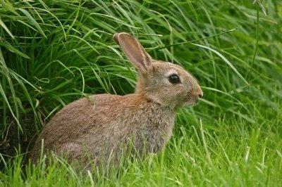 Kaninchenstall selber bauen? Das machst du mit einem Kaninchenstall Bauplan!