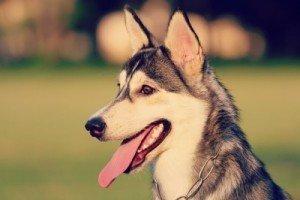 Eine Hundehütte selber bauen